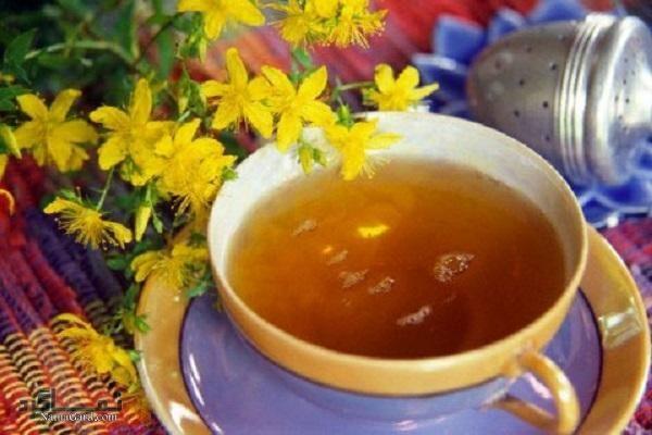 علف چای چیست؟ | خواص درمانی گیاه علف چای برای افسردگی | مضرات آن