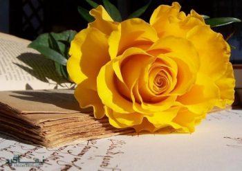 تعبیر خواب گل رز - دیدن گل سرخ در خواب چه مفهومی دارد؟