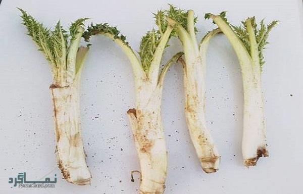 گیاه کنگر کوهی   خواص درمانی کنگر + ماست برای کلیه و کبد   مضرات کنگر