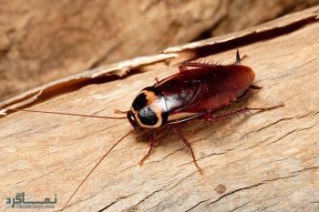 تعبیر خواب حشرات - دیدن حشرات موذی در خواب چه تعبیری دارد؟