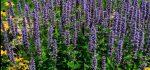 تعبیر خواب اشنان – معنی دیدن گیاه زوفا در خواب چیست؟