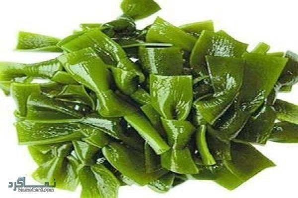 گیاه اشنه دریایی | خواص درمانی اشنه دریایی برای سرطان سینه | کاربرد آن در آشپزی
