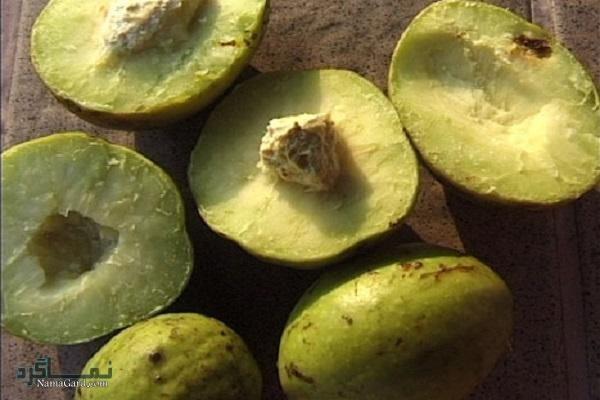گیاه هلیله زرد   خواص درمانی هلیله زرد برای پوست و لاغری   مضرات آن