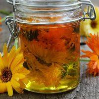 گل همیشه بهار |۳۰ خواص درمانی شگفت انگیز گل همیشه بهار برای سلامتی | عوارض آن