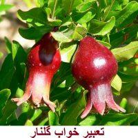 تعبیر خواب گلنار – دیدن درخت گلنار (انار زینتی) در خواب چه تعبیری دارد؟