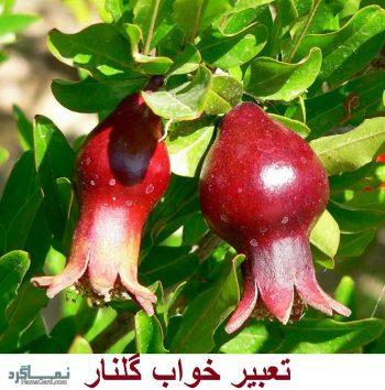تعبیر خواب گلنار - دیدن درخت گلنار (انار زینتی) در خواب چه تعبیری دارد؟