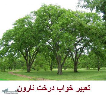 تعبیر خواب نارون - معنی دیدن درخت نارون در خواب چیست؟