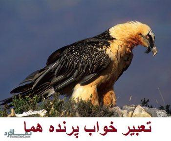 تعبیر خواب پرنده هما - دیدن مرغ هما در خواب چه تعبیری دارد؟