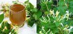 ۳۵ خواص درمانی گیاه پیچ امین الدوله | مضرات آن