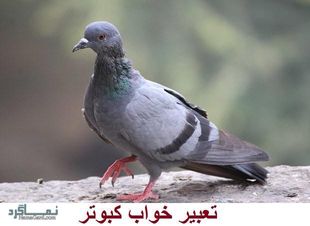 تعبیر خواب کبوتر - دیدن کبوتر در خواب چه تعبیری دارد؟