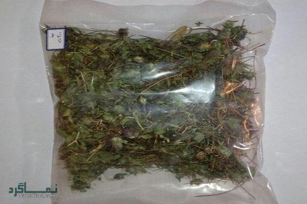 خواص و فواید درمانی گیاه زوفا برای سلامتی | مضرات آن