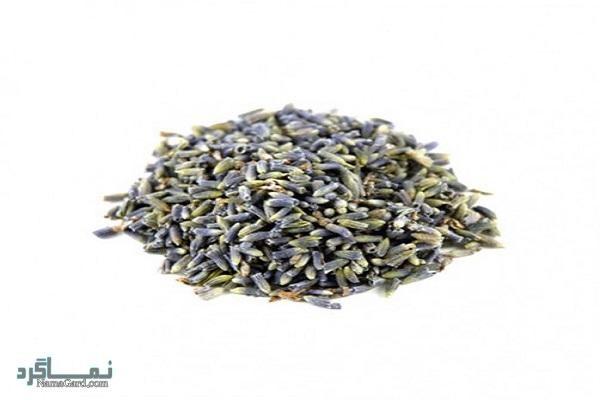گیاه سورنجان | معرفی خواص و فواید درمانی گیاه سورنجان