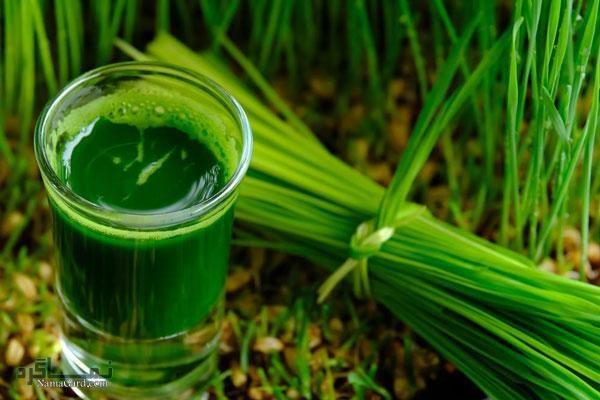 معرفی خواص و فواید درمانی علف گندم برای رفع خستگی