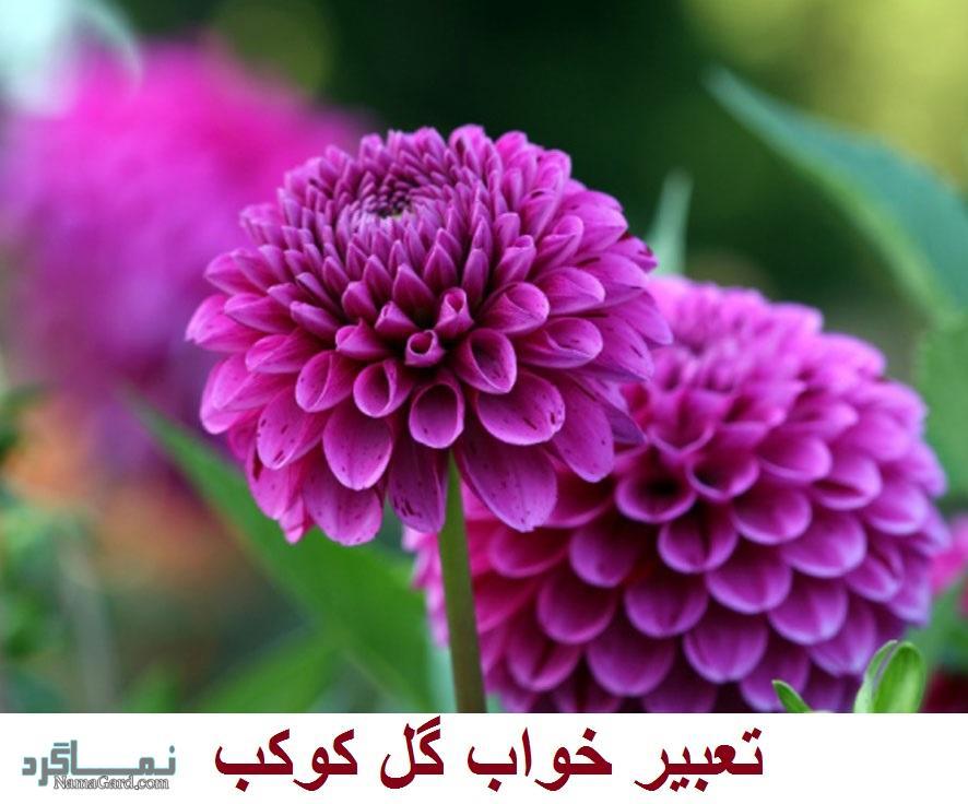 تعبیر خواب گل کوکب - معنی دیدن گل کوکب در خواب چیست؟