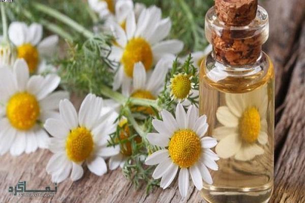 خواص درمانی بابونه رومی برای سلامتی|عوارض مصرف