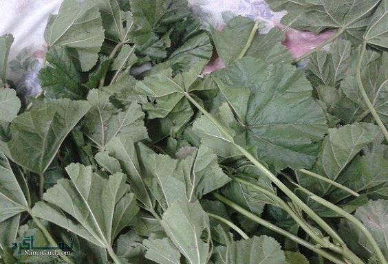 40 خواص درمانی گیاه ترشک برای سلامتی و لاغری مضرات