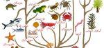 خلاصه کتاب ژن خودخواه از ریچارد داوکینز