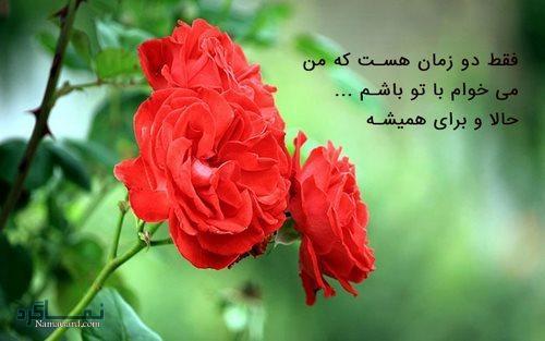 عکس پروفایل گل های رز قرمز عاشقانه و رمانتیک