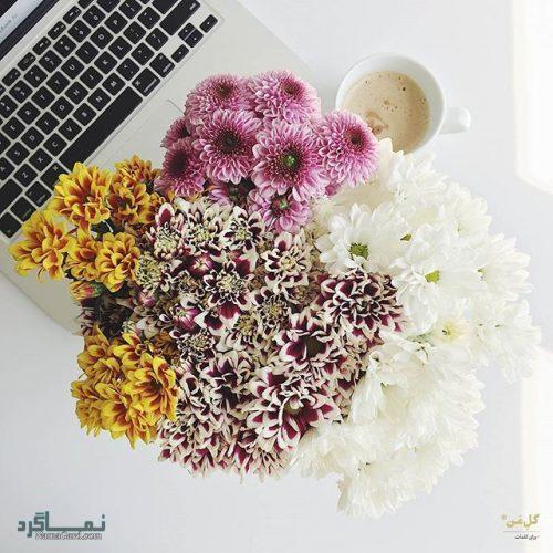 عکس پروفایل گل عاشقانه جذاب