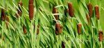 آشنایی با خواص درمانی گیاه لوئی برای سلامتی