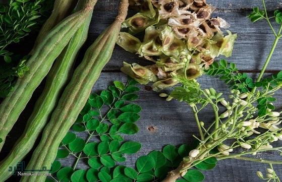 آشنایی با 31 خواص درمانی گیاه گز روغن یا مورینگا