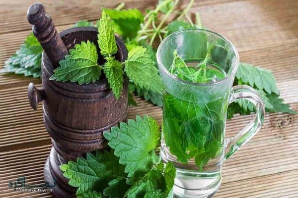 تاثیرات خواص درمانی گیاه گزنه برای سلامتی | چای گزنه