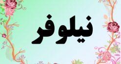 معنی اسم نیلوفر – معنی نیلوفر – نام زیبای دخترانه فارسی