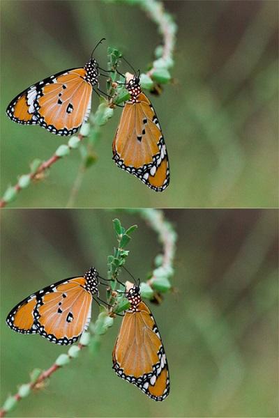 2 تست هوش تفاوت تصویری جذاب! (شماره 4)، عکس شماره 1