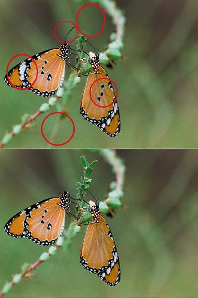 2 تست هوش تفاوت تصویری جذاب! (شماره 4)، جواب عکس شماره 1