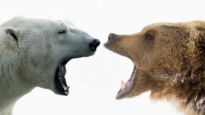 معمای شگفت انگیز تشخیص رنگ خرس + همراه با جواب