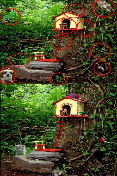 تفاوت بین تصاویر برای تیز بین ها (25) - جواب تست 2