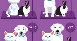 تست هوش جدید وزن حیوانات + با جواب