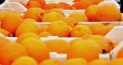معمای سخت مرد پرتقال فروش و فرزندانش + جواب