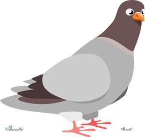 تست هوش هیجانی حرکت کبوتر برای نابغه ها! + جواب