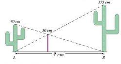 تست هوش ریاضی جدید فاصله ی کاکتوس ها + جواب