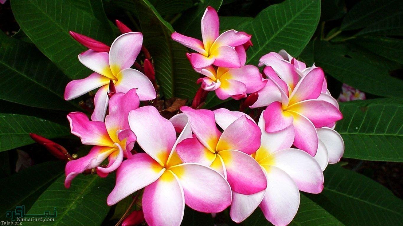 گلهای شیک جدید