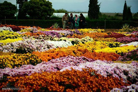 عکس گلهای زیبای باکلاس