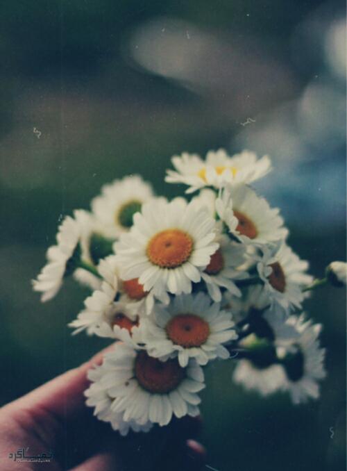 عکس گلهای خاص شیک