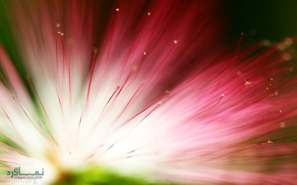 عکس گلهای شیک زیبا