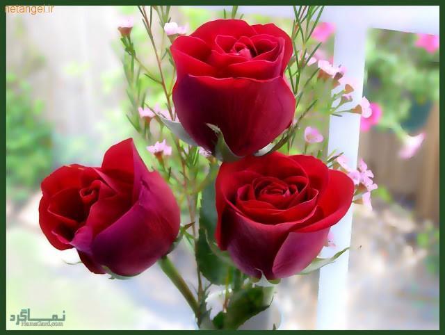 گلهای شیک و خاص باکلاس