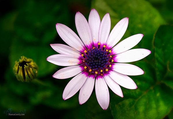 عکس گلهای جدید زیبا