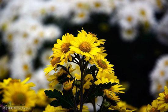 عکس گلهای زیبای متفاوت