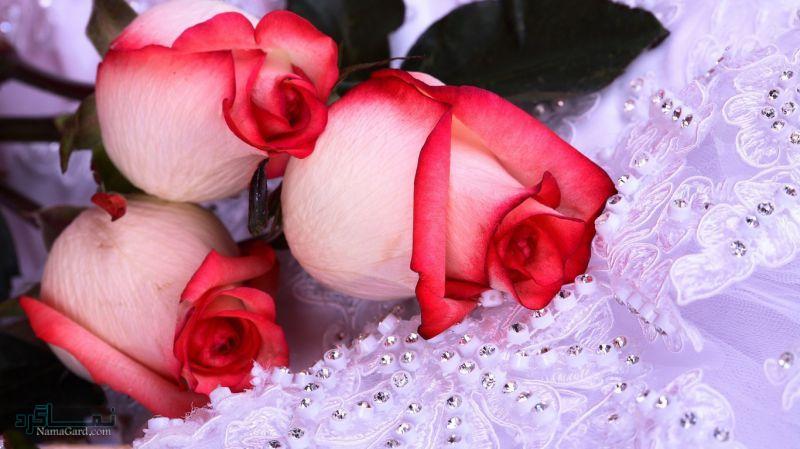 گلهای شیک و خاص جدید