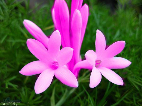 عکس گلهای شیک متفاوت