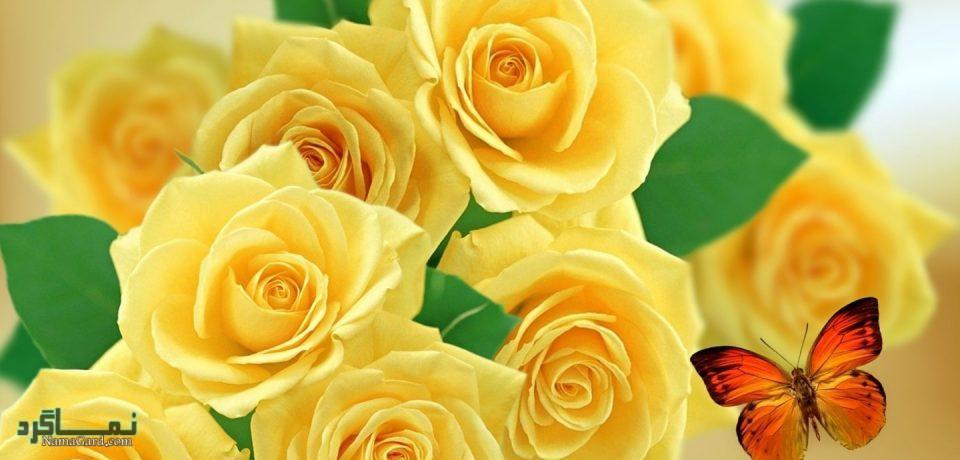 گلهای زیبا و عاشقانه شیک
