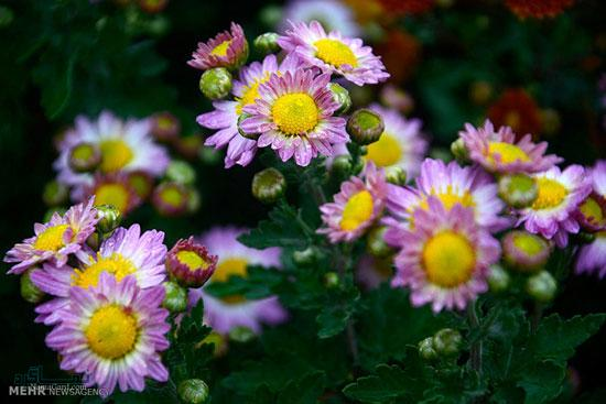 عکس گلهای زیبای شیک