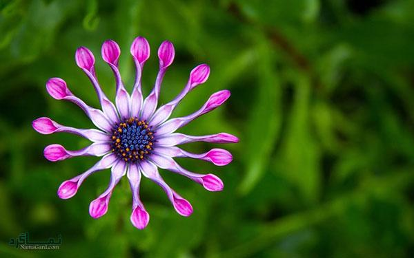 عکس گلهای جدید جذاب