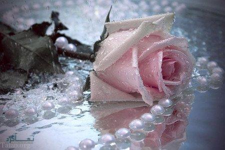 گل زیبای عاشقانه شیک