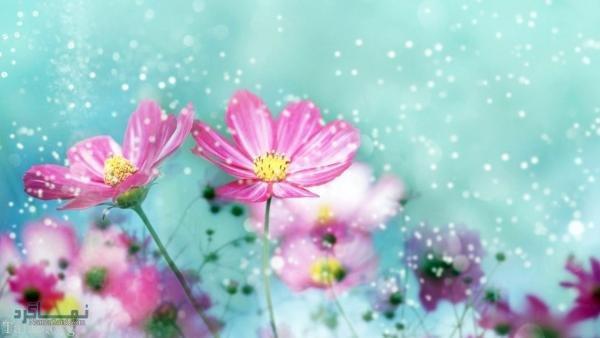 عکس گلهای شیک جدید