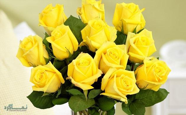 گلهای شیک و خاص زیبا